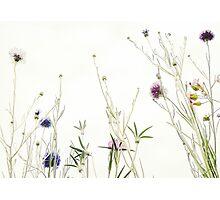 Wild summer blooms... Photographic Print