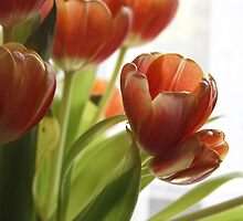 My Tulips by Cathie Tranent