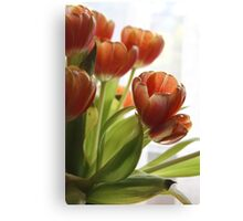 My Tulips Canvas Print