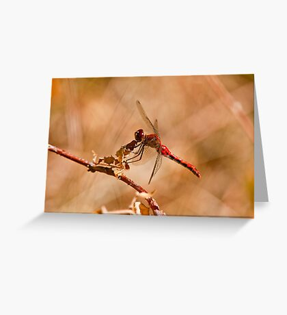 White Faced Meadowhawk Dragonfly Greeting Card