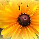 All Yellow by Vanessa Barklay