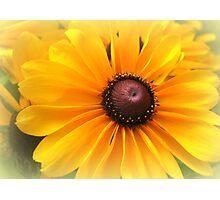 All Yellow Photographic Print