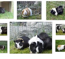 I  LOVE  GUINEA-PIGS by Heidi Mooney-Hill