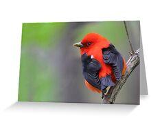 Scarlet Tanager Greeting Card