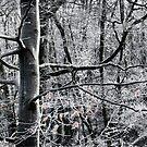 Favourite Tree 4 by John Dewar