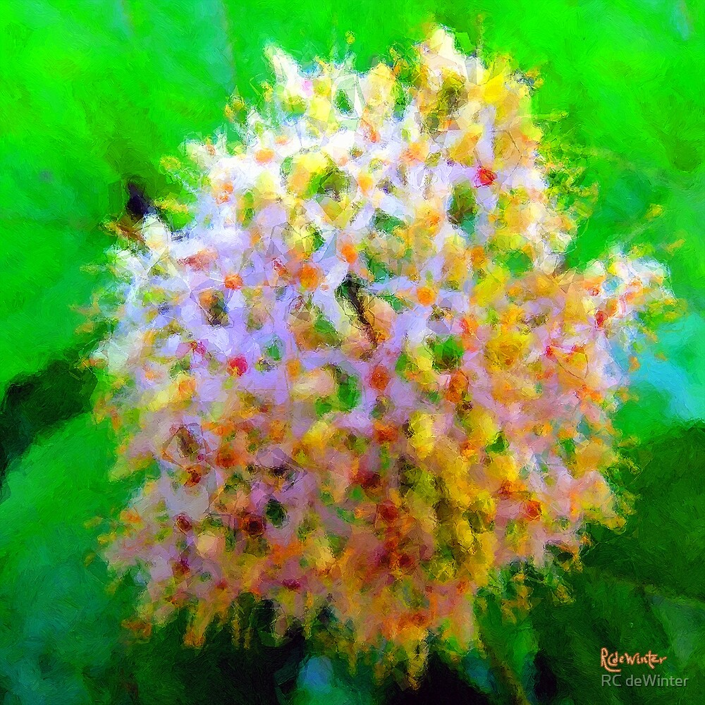 Blossomburst by RC deWinter