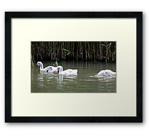 1..2..3. duck ! Framed Print