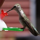 Hummingbird at Feeder by Diana Landry
