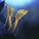 Honeysuckle Dancers by Kelly Chiara