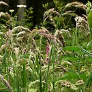 Variety of Wild Grass-Hint of Foxglove by Eileen O'Rourke