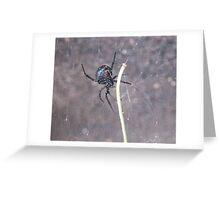 Busy Black Widow Greeting Card