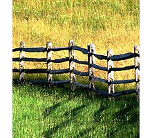 In Green Pastures Photographic Print