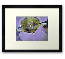 Fly on Purple Flower Framed Print