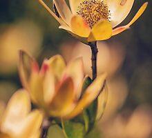 Golden Flowers by yolanda
