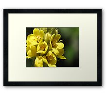Nature's Remedy Framed Print
