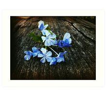Little blue flowers Art Print