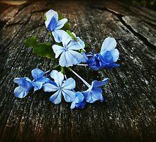 Little blue flowers by fourthangel
