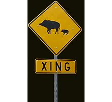 Pigs XING Photographic Print