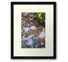 Tiny Violet flowers Framed Print