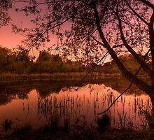 Martin's Pond by twilight by Lamar Francois