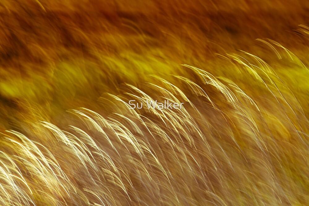 Paddock of hidden beauty 2 by Su Walker