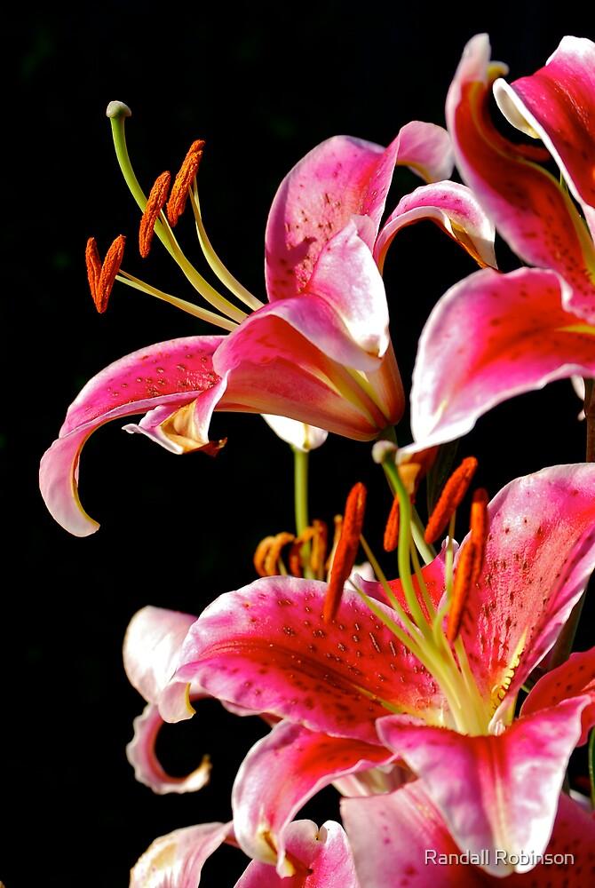 Flower 2 by Randall Robinson