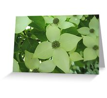 Delicious Dogwood Greeting Card