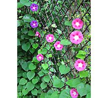 Chain link Flowers Photographic Print
