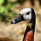 What kind of bird? by loiteke
