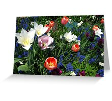 The season of tulip splendour Greeting Card