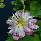beautiful flower by solomon  roberts
