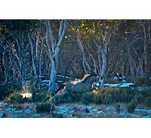 Stallions Run Photographic Print