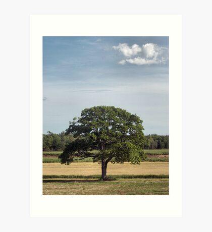 The Joshua Tree Art Print