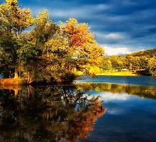 Light on the Island of Trees  by KellyHeaton
