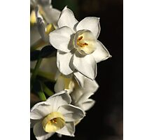 Daffodils Day Photographic Print