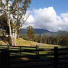 """""""hidden"""" house in Tassie bush at Loongana - perfect! by gaylene"""