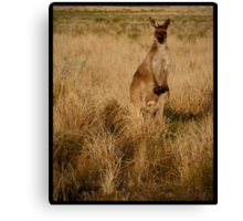 Skippy!  Canvas Print