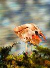 Flamingo by KBritt