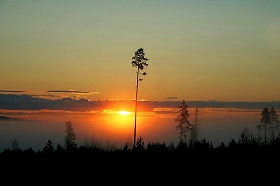 Midnight Sun by Jo Nijenhuis