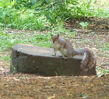 Mr Squirrel by Debbie Thatcher