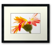 Crazy Flower Framed Print