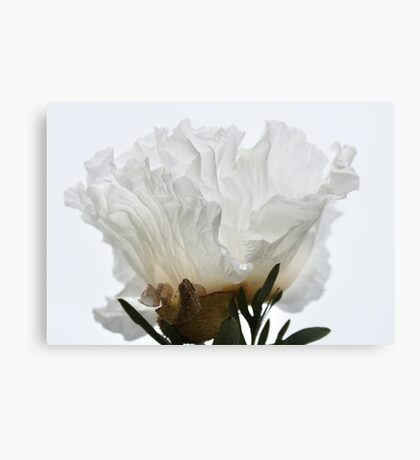 Paper White Canvas Print