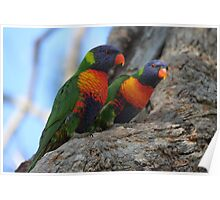 Two Little Lorikeets Poster