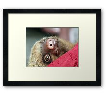 Baby sloth Framed Print