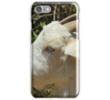 White Goat With Horns iPhone Case/Skin