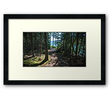 A Walk in the Woods – Acadia National Park, Maine Framed Print