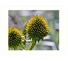 Prickly beauty Art Print