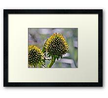 Prickly beauty Framed Print