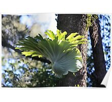 Broad Horn Growing Wild Poster