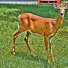 Oh Deer by DmitriyM